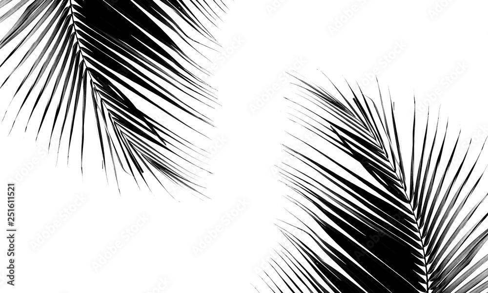 Fototapety, obrazy: beautiful palms leaf