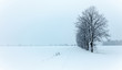 canvas print picture - Winterlanschaft
