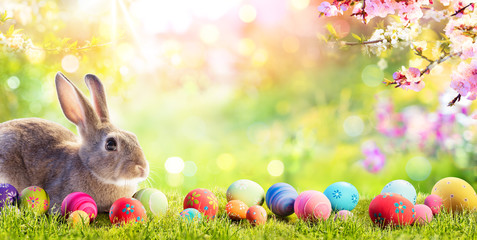 Adorable Bunny With Easter Eggs In Flowery Meadow