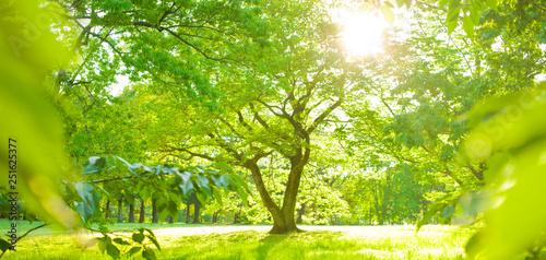 Fotografía  sunshine garden