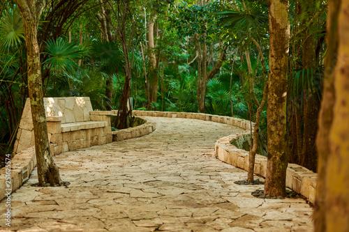 Fotografía  Walkway through the tropical forest