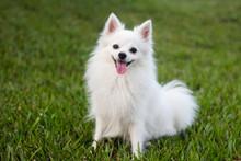 Portrait Of Dog Sitting On Grassy Landscape
