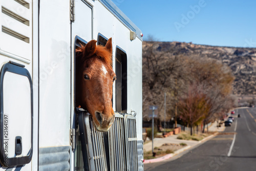 Autocollant pour porte Chevaux Horse looking out from a window during a sunny day. Taken in Escalante, Utah, United States.