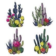 Colorful Cactus Compositions With Flowers. Hand Drawn Vector Illustration.