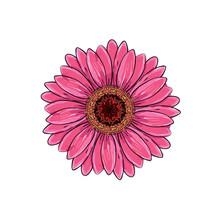 Brite Pink Magenta Color With ...