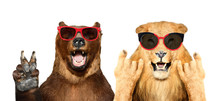 Funny Bear And Lion In Sunglas...