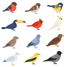 Birds Of Different Types Set. ...