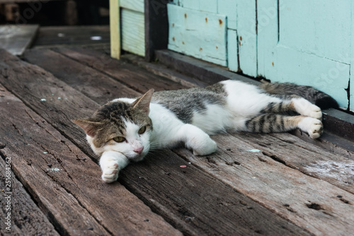 Photo  Stray cat laying down on wooden planks