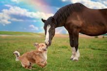 Horse And Border Collie Dog Ar...