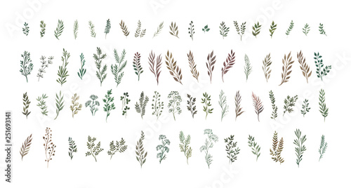 Foto  Watercolor herbal organic nature floral illustration set on white background