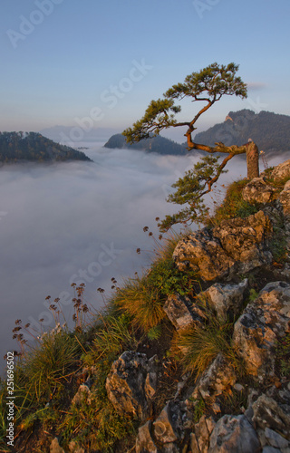 Fototapety, obrazy: Landscape with tree, fog, autumn and sunrise, Pieniny, Poland
