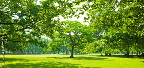 Foto op Aluminium Lime groen garden tree