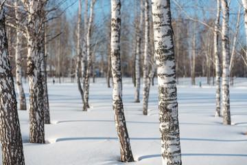 Drzewa w zimowym lesie. Zimowy las. Zimowy krajobraz.