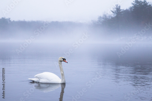 Fotografie, Obraz  A swan floating on foggy lake in the morning