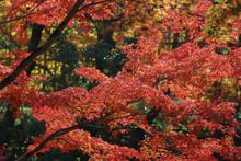 The Fall Season At Byodo In Temple Japan