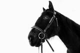 Horse head profile, black and white beautiful animal portrait - 251731959