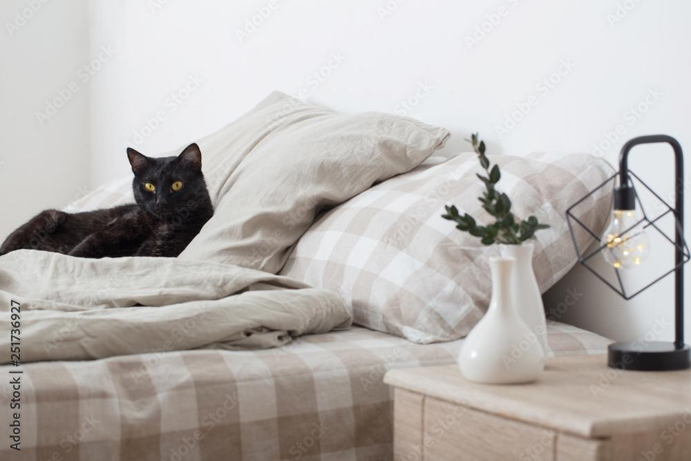 Fototapety, obrazy: black cat on bed