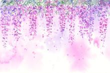 藤の花 水彩画