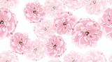 Akwarela róże, Kwiecisty Bezszwowy wzór. - 251777117