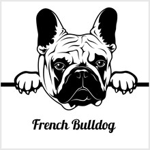 French Bulldog - Peeking Dogs - - Breed Face Head Isolated On White
