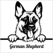 German Shepherd - Peeking Dogs - - Breed Face Head Isolated On White
