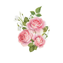 Watercolor Rose Vector Omposit...