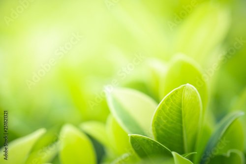 Plakaty zielone  close-up-beautiful-view-of-nature-green-leaves-on-blurred-greenery-tree-background-with-sunlight