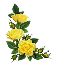 Yellow Rose Flowers In A Corne...