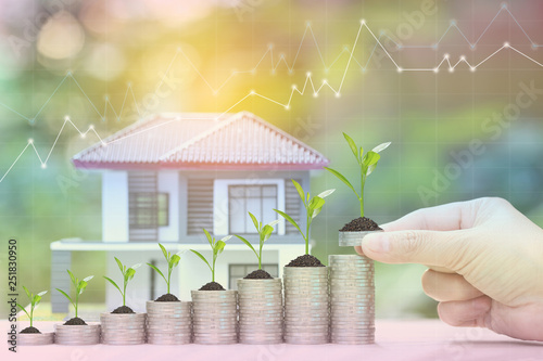 Fotografía  Interest rate up and Banking concept, Plant growing on stack of coins money and