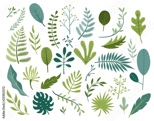 Obraz Set of different tropical and other isolated green leaves. Palm, banana leaf, hibiscus, plumeria, split leaf, philodendron. Jungle collection for your design.Vector illustration. - fototapety do salonu