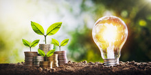 Plant Growing On Coins And Light Bulb. Concept Saving Money With Energy