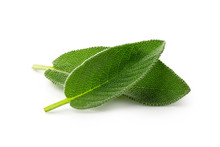 Two Whole Fresh Sage Leaves Isolated On White.