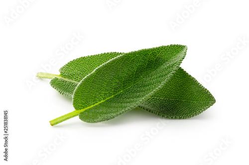 Fototapeta Two whole fresh sage leaves isolated on white. obraz