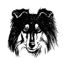 Vector Hand Drawn Dog Collie V...