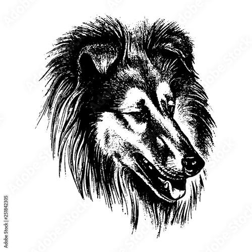 Poster Croquis dessinés à la main des animaux Vector hand drawn dog collie vintage illustration
