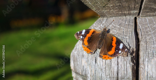 Foto auf Leinwand Schmetterlinge im Grunge Black and orange Vanessa atalanta butterfly on a wooden surface. Place for text. Blurred background. Old wood with cracks.