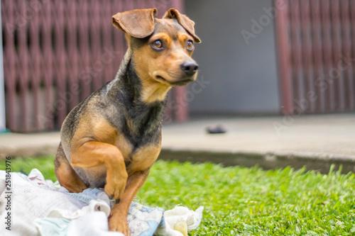 Foto  cachorro atento