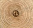 Texture of tree stump