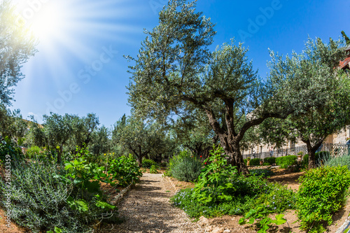 Fotografía Gethsemane Garden on the Mount of Olives