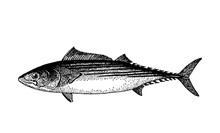 Vector Hand Drawn Fishes Sketc...