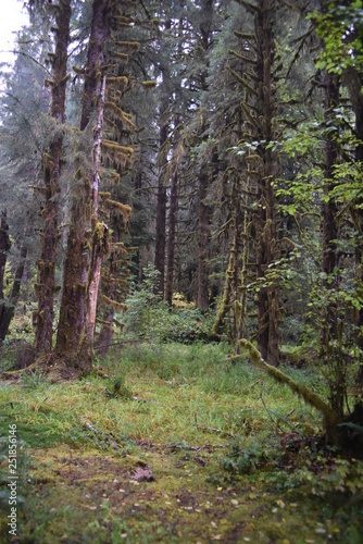 Olympic National Park, WA., U.S.A. Oct. 18, 2017. Hoh Forest autumn.  Rainy day.