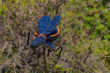 Decorative Insect In The Garde...