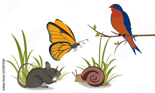 Cuadros en Lienzo  A collection of four forest animals including a blue swallow, yellow butterfly,