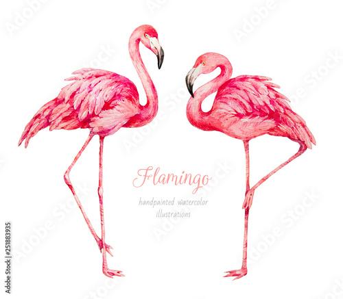 Flamingo. Watercolor botanical illustration Canvas Print