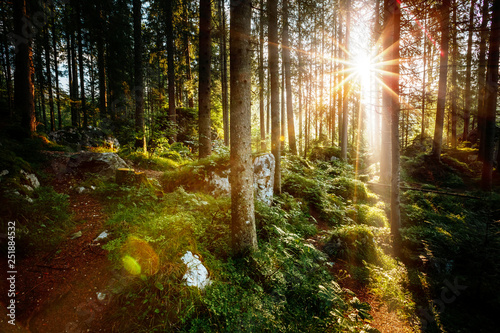 Magical woods in the morning sun. Fairy forest in autumn.