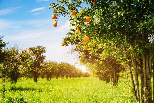 Fotografie, Obraz Impressive view of green garden. Farming in springtime.