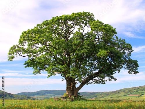 Poster Baobab Baum