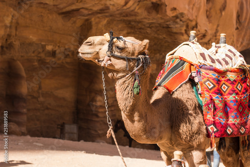 Poster Maroc camel desert animal profile portrait photography in heritage touristic site