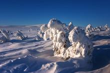 Drzewa Oblepione śniegiem W K...