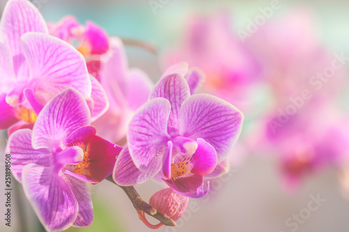 Valokuvatapetti Pink orchid in front of pastel coloured background and creamy bokeh